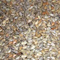 Roasted and Salted Sunflower Seeds Out Of The Shell